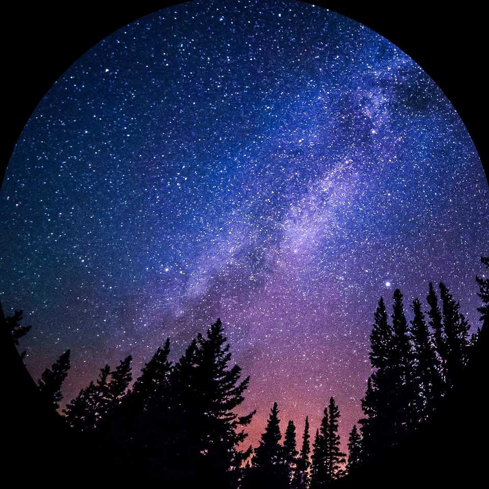 Ciel étoilé au dessus d'une forêt durant la nuit